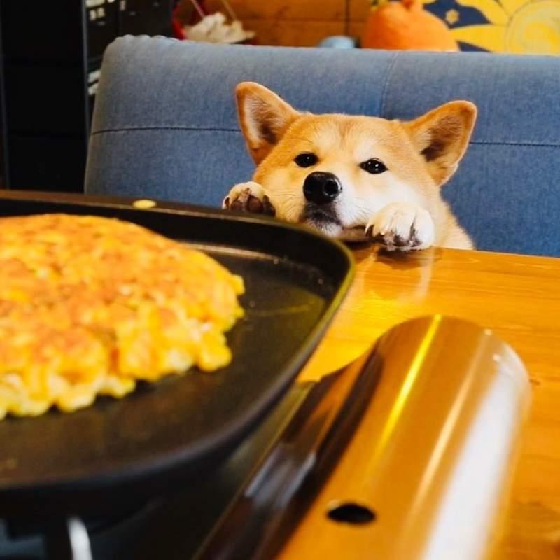 宅宅新闻 | 《柴犬的料理教室》饲主精心製作的宠物鲜食,竟被盗用误会成虐待狗狗!?