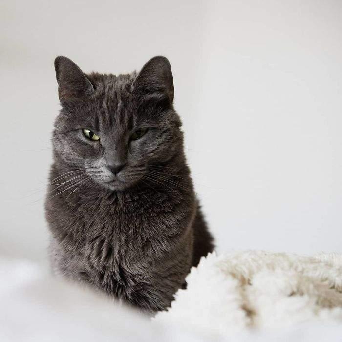 《请摄影师来帮自己顾猫》结果就是收穫了好多张猫皇玉照 | 宅宅新闻