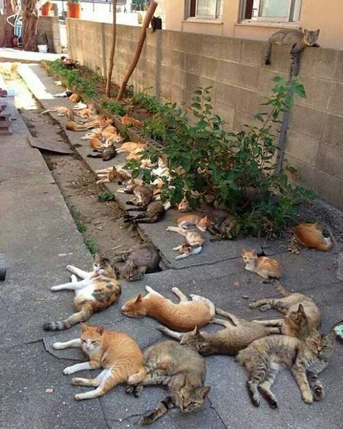 猫薄荷的魅力《被猫草弄ㄎㄧㄤ的猫》不管牠吸了什幺也给我来一点好了(伸) | 宅宅新闻